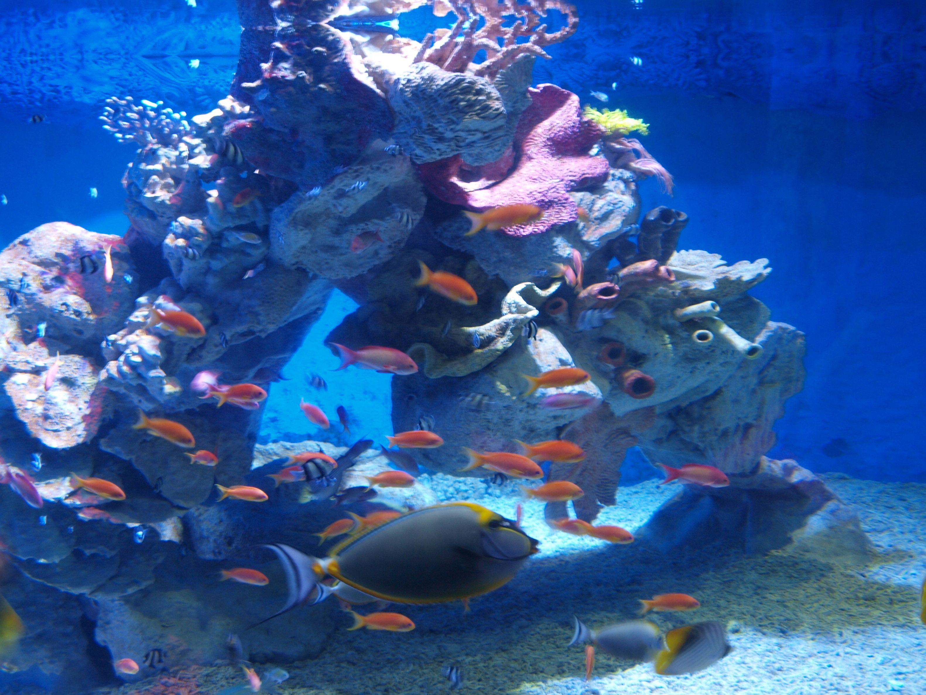 Grand Aquarium Hurghada Fische