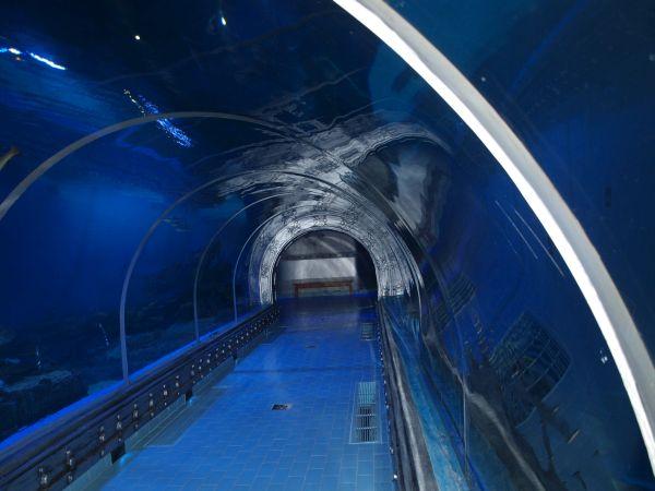 Hurghada Grand Aquarium Tunnel